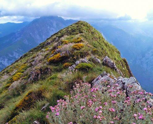 La Pica Loto Picos de Europa Leon