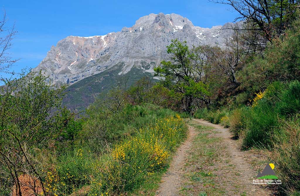 Los claros del bosque permiten contemplar las altas cumbres de Picos de Europa. En la fotografía el murallón de la Bermeja, Macizo Occidental.